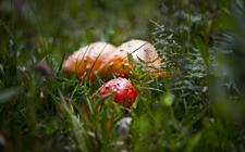 长沙:发生多起误食野生毒蘑菇中毒事件 专家提醒:不可乱采摘进食