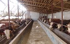 农业部关于开展动物检疫证明和畜禽标识专项整治行动的通知