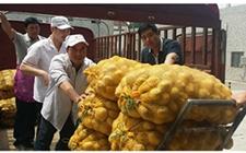 <b>宁强县土豆遇大量滞销 爱心学校助种植户解决农产品滞销难题</b>