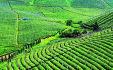 农业科技:物理农业的推广使农业更环保