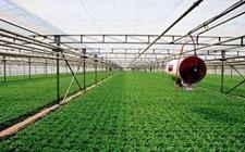 新疆:地矿局鼎力相助绿色生态农业的生产发展