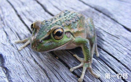 蟾蜍和青蛙有什么区别 蟾蜍是蛙类吗