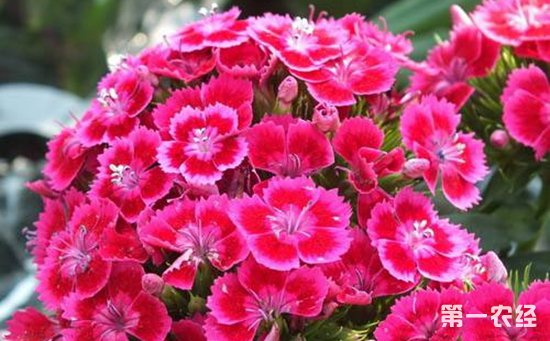 6种对孕妇有害的盆栽植物类型介绍!家有孕妇不要养