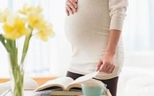 6种对孕妇有害的盆栽植物类型介绍!家有孕妇不