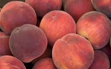温州:吃个桃子竟然嘴巴红肿长皮疹?医生:食物过敏需及时就医