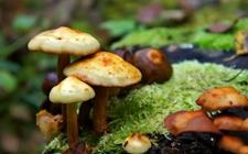湖南醴陵:一家五口食用野生蘑菇后集体中毒 专家警示:慎采慎食!