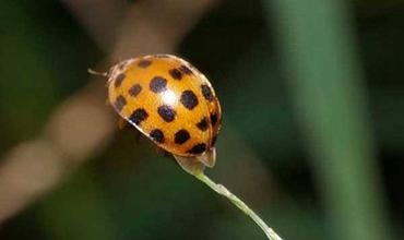 冬瓜主要虫害的形态特征和防治措施介绍!