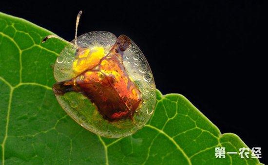 常见春天昆虫鉴别