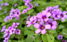 5种一年四季都开花的盆栽植物介绍!让你月月有