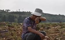 <b>义马市老人种植土豆遇滞销 4万斤土豆无人问津急得直掉眼泪</b>