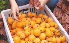 """""""互联网+农产品""""助推农产品销售 让滞销农产品变成畅销品"""