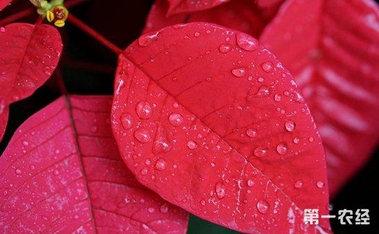 9种含有毒素的盆栽植物介绍!家有小孩需慎养