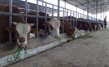 农村畜禽养殖申请补贴需要哪些证件?有哪些养殖补贴可以争取?