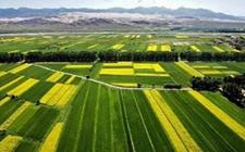 打造现代农业产业集群 农业全产业链开发创新获政策支持