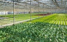 大棚种植:蔬菜大棚的夏季管理技术要点