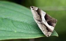 石榴树虫害有哪些?石榴树常见虫害的为害特点和防治措施