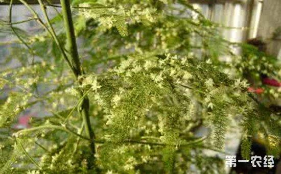 10种拥有强大功效的盆栽植物介绍!健康养生也可以很简单