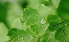 10种拥有强大功效的盆栽植物介绍!健康养生也可