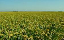 农民专业合作社法修订草案首次提请全国人大常委会审议