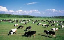 宁夏固原:提升畜牧业机械化水平 稳步向科技型、智能型转变