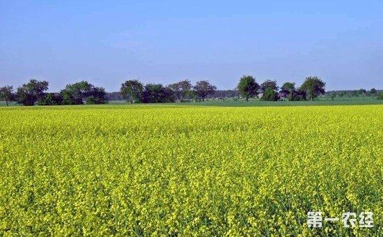 大连:大力推广抗旱技术  提高农业抗旱能力