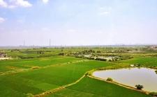 """农业部经管司长诠释土地制度改革:""""三权分置""""有别于""""联产承包"""""""
