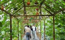 甘肃定西:兴建现代农业示范园 开创生态观光农业运营之路