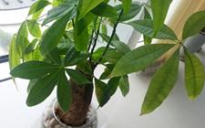7种能旺风水的盆栽植物介绍!聚财旺家保平安