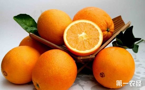 脐橙品种有哪些?脐橙品种大全