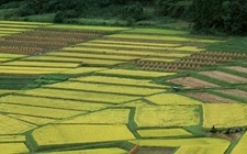 购买农业保险有补贴吗?哪些险种可以获得补贴?补贴多少?