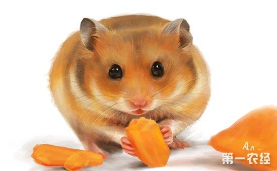 仓鼠都是很萌很可爱的,但是要说谁最可爱的话,也是很难选啊