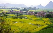 河南濮阳:兴建引黄入冀补淀工程 打造现代农业示范带