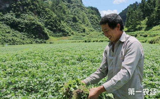 贵州镇远:积极发展特色种植项目  药辣椒铺就致富路