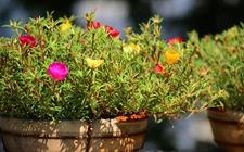 """3种好养又好看的盆栽植物介绍!""""植物杀手""""的"""