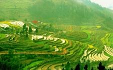 西部开发12省市区学习发展富硒农业知识 推动精准扶贫开发