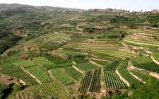 土地流转坚守三原则 工商资本带领农民一起富