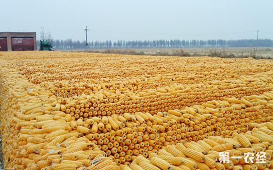 粮改饲米改豆如何推进