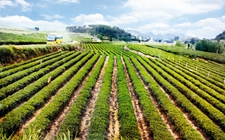 天津:4.5亿元农业支持保护补贴资金支持农业发展