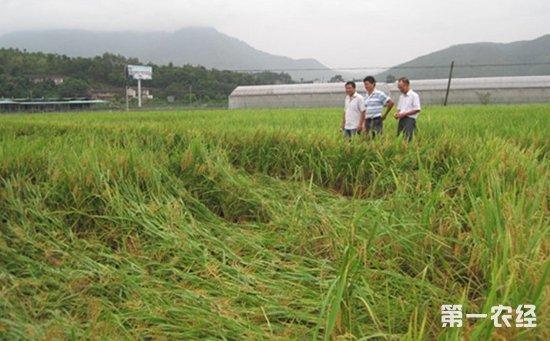 """从全国农村经济发展""""十三五""""规划看未来农业补贴五大变化"""