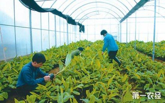 多方齐力协作保证农产品市场供需平衡
