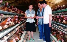 辽宁铁岭:稳步推进国家现代农业畜牧业示范区建设