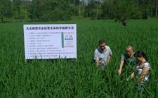 辽宁:技术创新让化肥农药减量增效