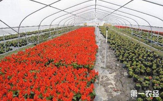 山东乐陵:推广普及先进生产技术  全面促进花卉苗木产业发展