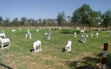 宁夏:盐池滩羊养殖系统成功入选第四批中国重要农业文化遗产名单