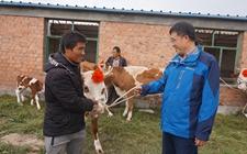宁夏:加快推进产业扶贫工作 推动贫困人口持续稳定脱贫