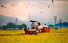 农业知识产权融资困难该如何解决?
