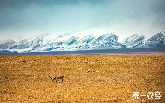青海省可可西里自然遗产地保护条例
