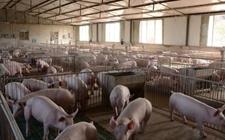 农业部:抓好畜禽粪污资源化利用 改善农村居民生产生活环境