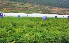 宁夏西吉:建设马铃薯原种基地1万亩