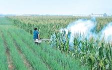 湖南隆回:开启蝗虫灭杀工作 保护农作物安全生长